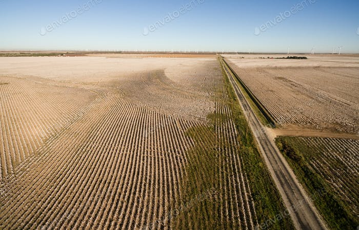Cotton Plantation Green Energy Farm Field Wind Power Generation