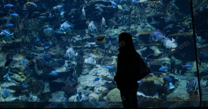 Woman visit aquarium in zoo park