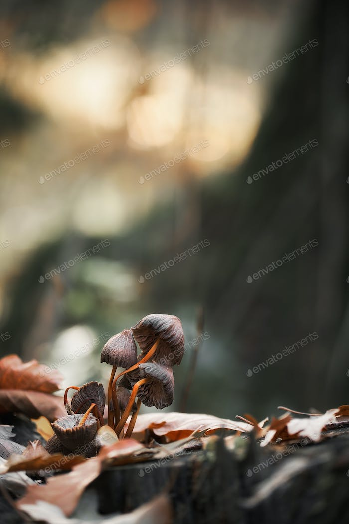 Macro photo of mushrooms