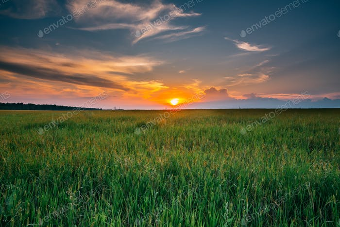 Summer Sunset Evening Sky Above Countryside Rural Meadow Landsca