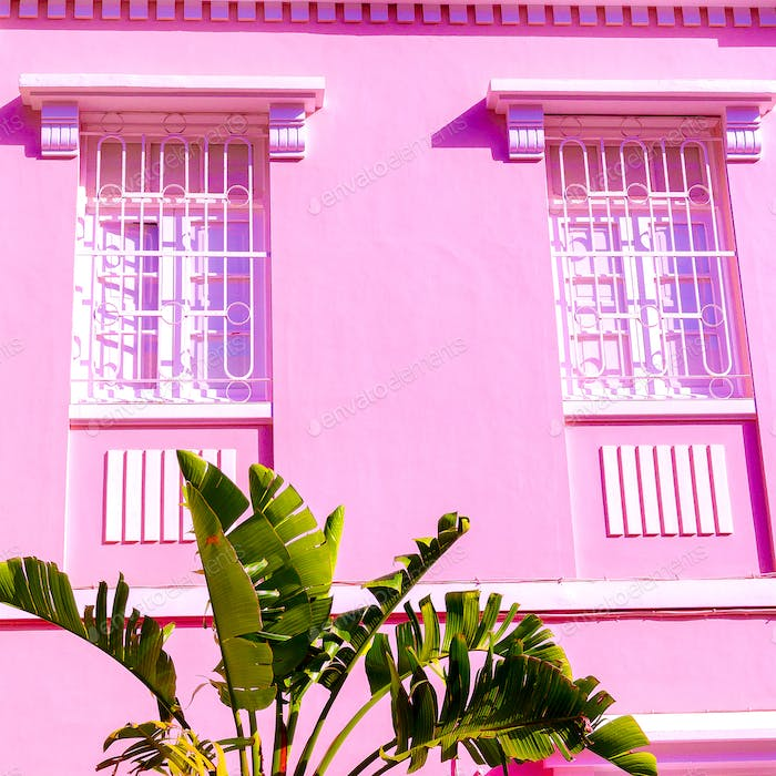 Palm fashion location. Plants on pink concept