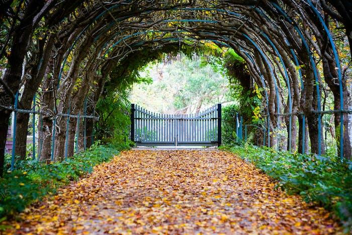 Foxglove Spires Path