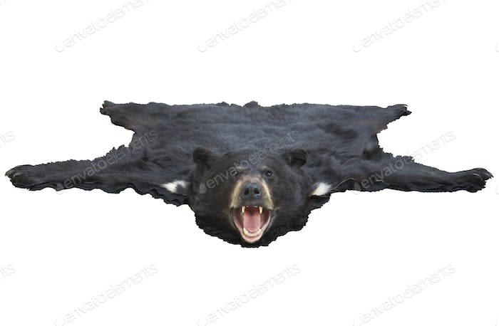 Low Angle View of Bearskin Rug Isolated on White Background