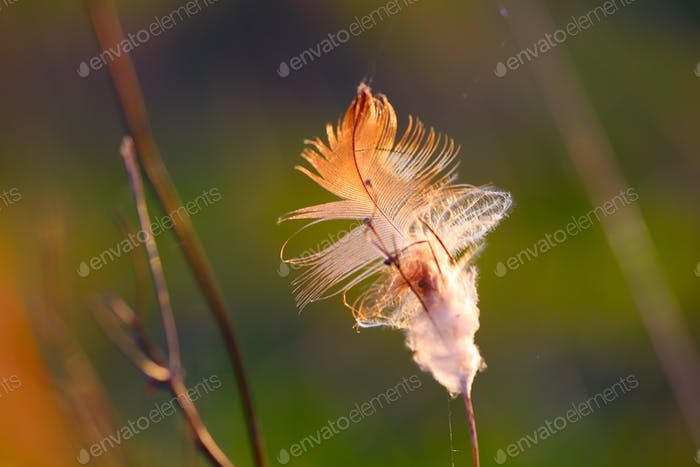 Feather in dried grass