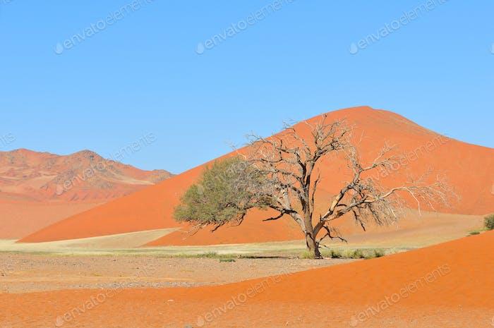 Horizontal de hierba y dunas cerca de Sossusvlei, Namibia