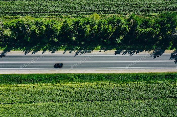 Aerial view of a rural asphalt road through a green corn field in summer