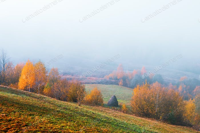 Amazing scene on autumn mountains