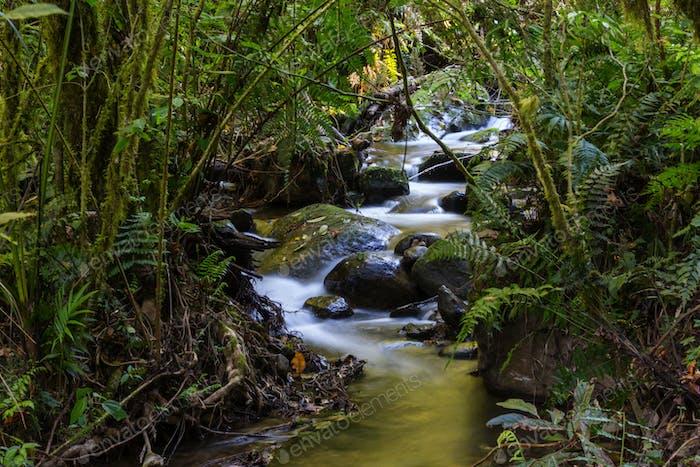 Bach im Dschungel