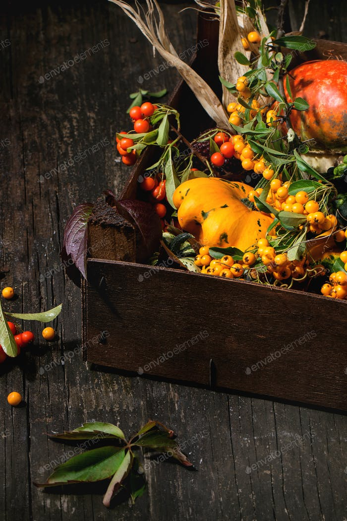 Assortment of different pumpkins and berries