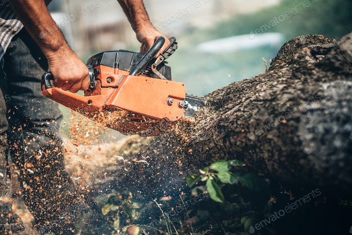 Male lumberjack cutting tree using professional equipment, gasoline powered chainsaw