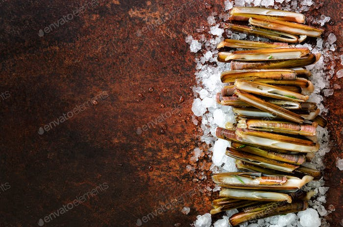 Bundle, bunch of fresh razor clams on ice, dark concrete background. Copy space, top view, banner