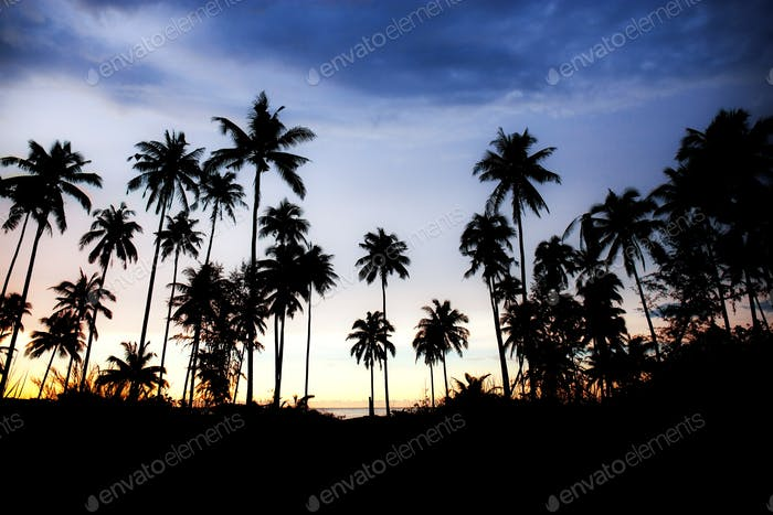 Palm tree with silhouette