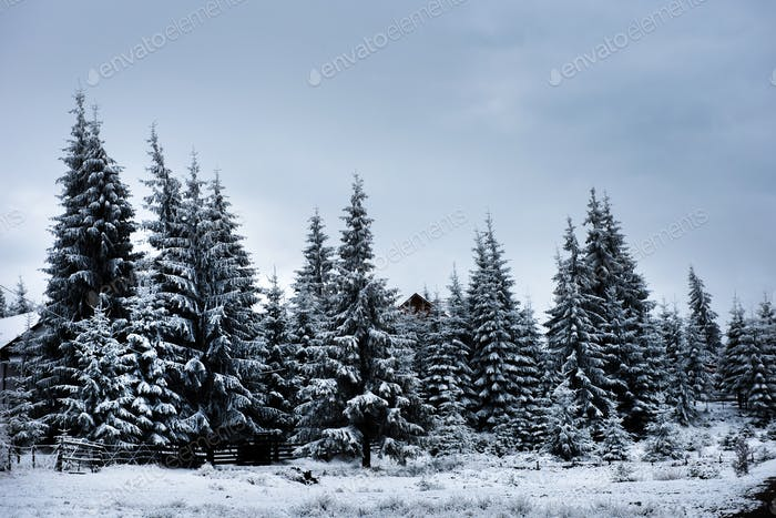 Beautiful winter landscape with snow covered trees. Christmas greetings