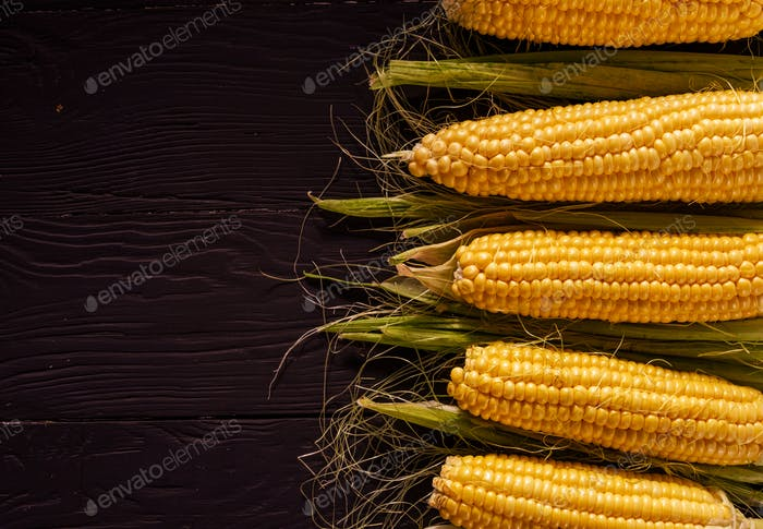Border of fresh corn on the cob with copyspace
