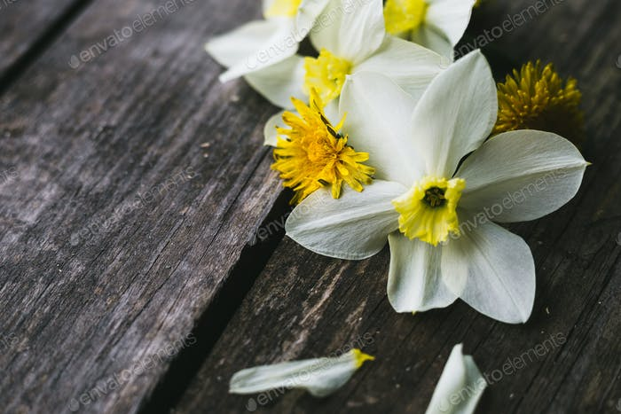 Spring flowers on a old wooden background