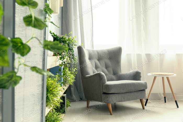 Armchair and plants