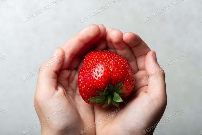 Huge fresh strawberry in the hands