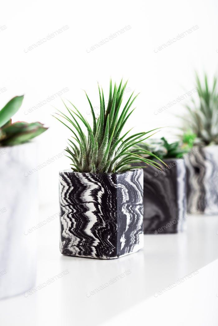 Мраморные геометрические сочные плантаторы с красивыми крошечными растениями