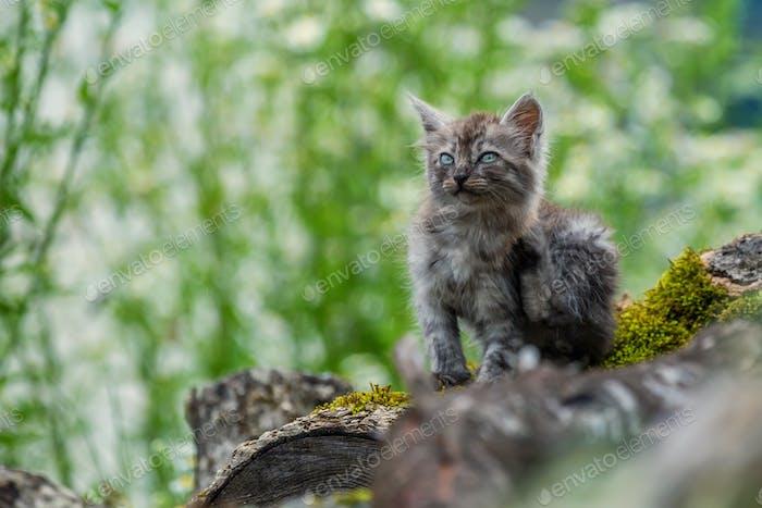 Elend streunende Kätzchen