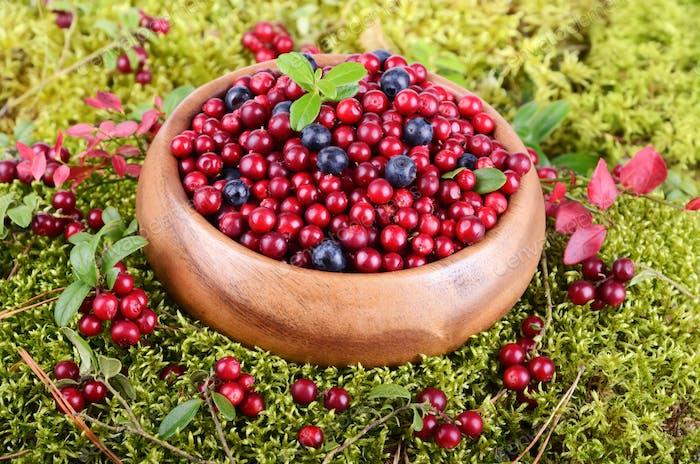 Berrys in moss