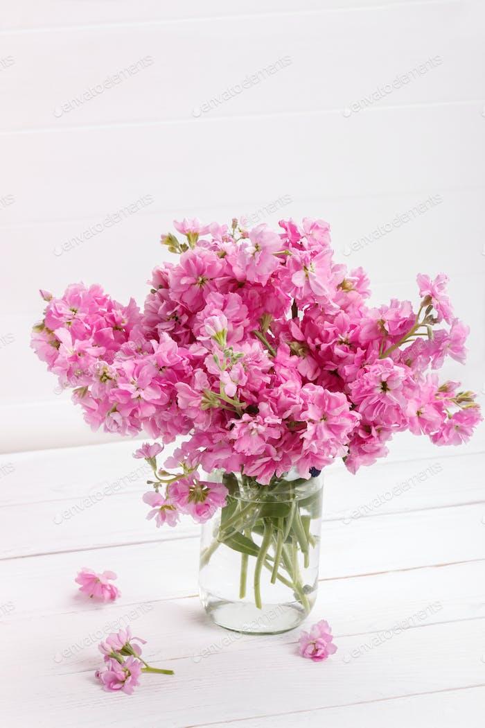 Matthiola Blumen