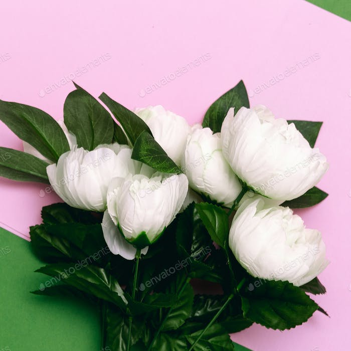 Bouquet of white roses on pink minimal art design