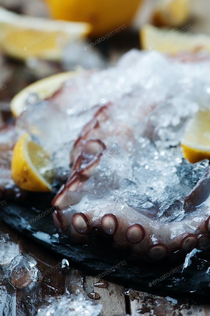 Uncooked octopus with ice and lemon