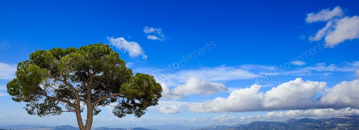 Pine tree by the sea, blue sky background, Greece, Attica.