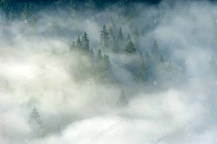 Autumn forest on the mountain slope with fog