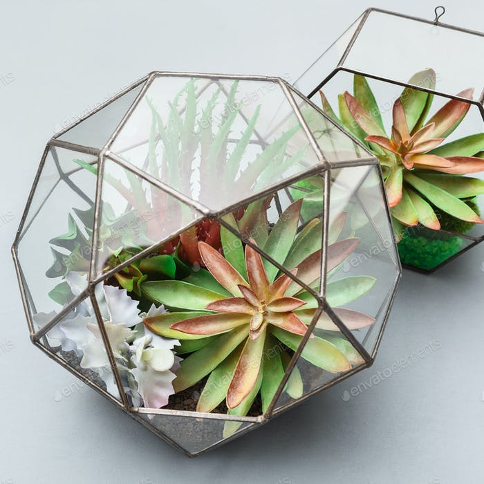 Geometric florariums with succulent plants, closeup, crop
