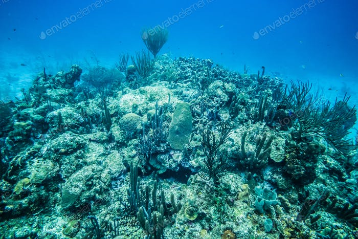 Coral Reef in San Andres Island.
