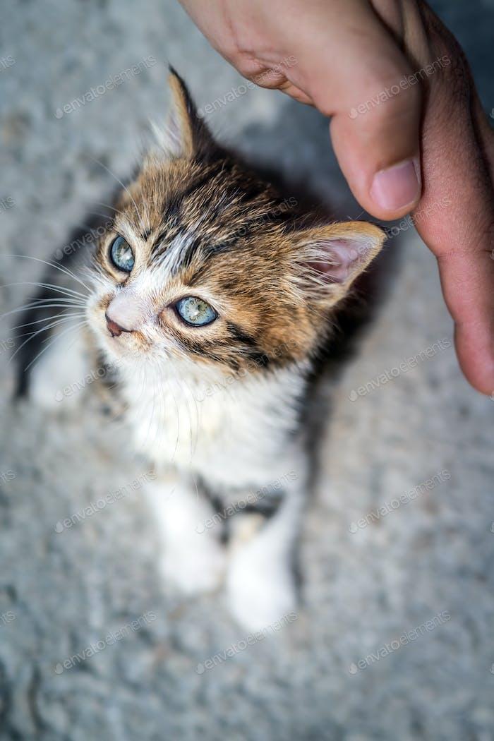 Niedliche kleine Kätzchen