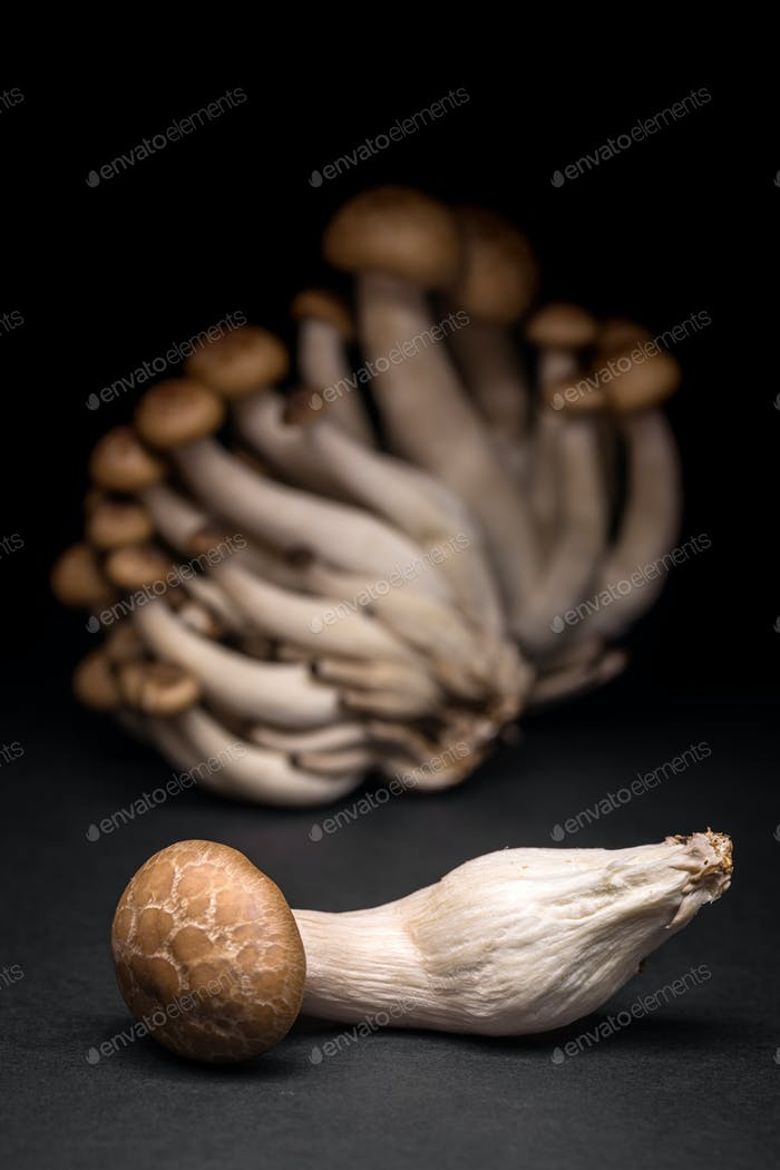 Shimeji mushrooms