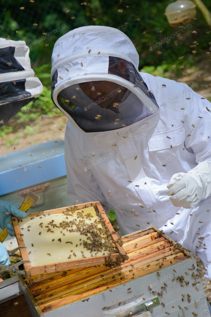 beekeeper in the apiary