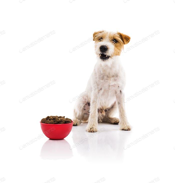 Junger Hund mit Schüssel voll Hundefutter isoliert