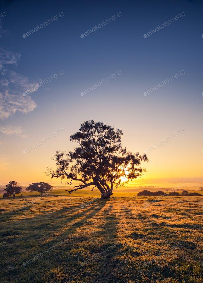 Clare Valley Sunrise