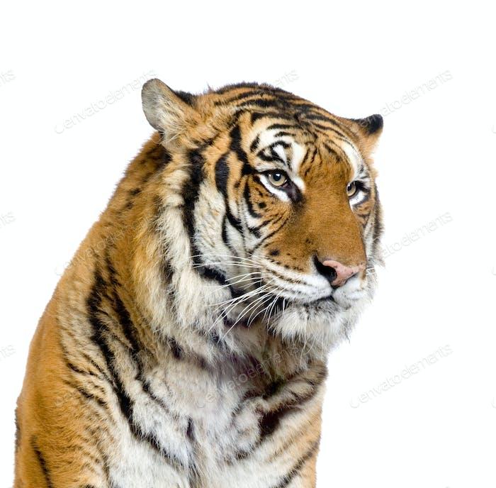tiger s face photo by lifeonwhite on envato elements