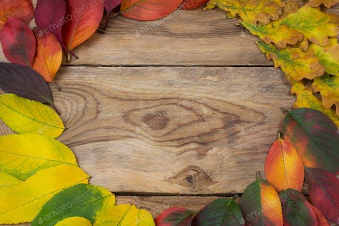 Thanksgiving fall leaf wreath frame, copy space