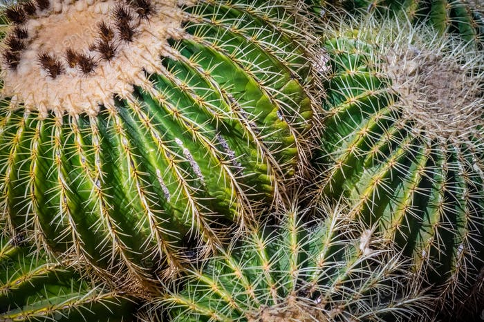 Close up of cactuses