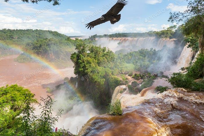Condor over Iguasu