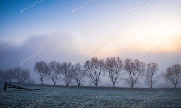 Kleine Bäume mit blauem Nebel in den Karpaten in der Ukraine