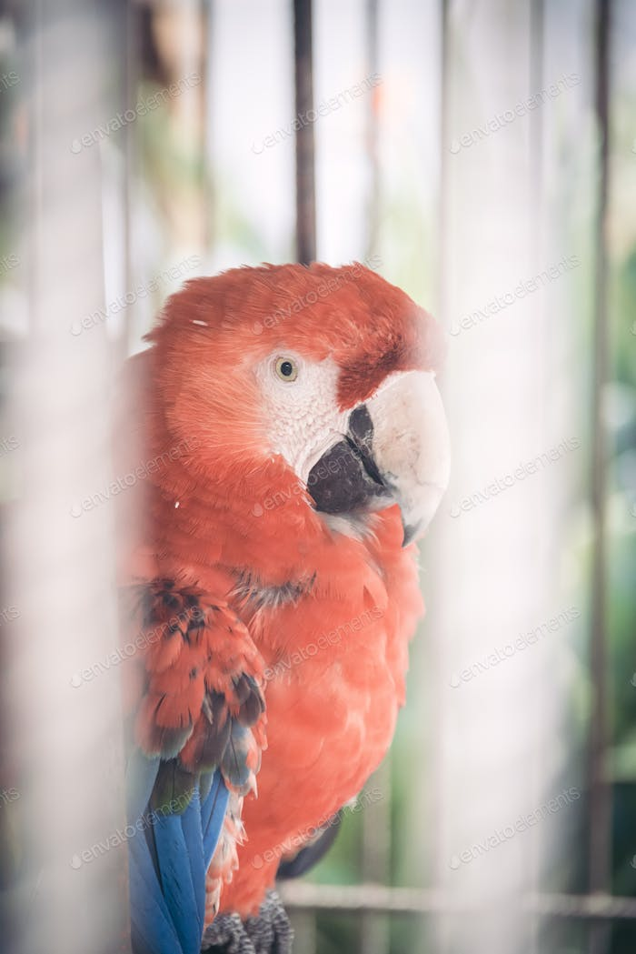 Big parrot in a cage closeup portrait