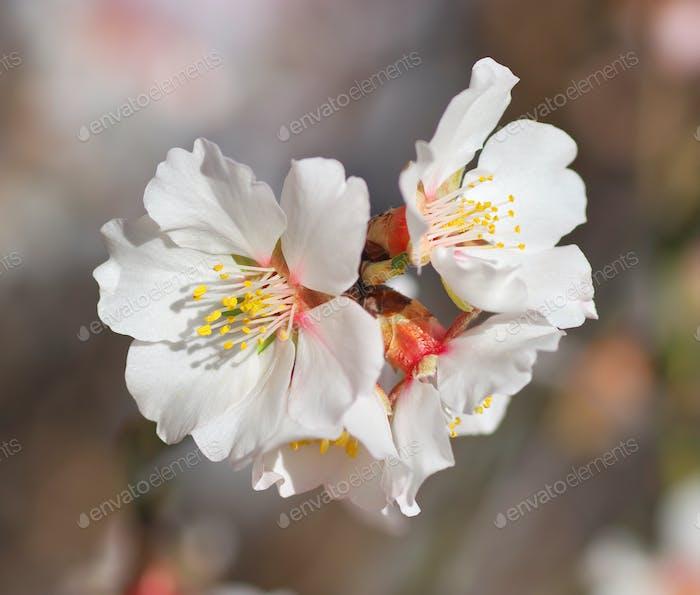 Frühlingsblume auf Baum.