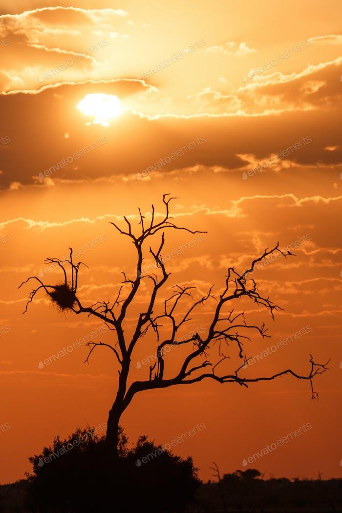 Sunset - Chobe N.P. Botswana, Africa