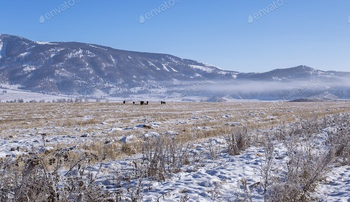 Snowy valley with wild Herd of horses, village on Altai mountains