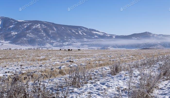 Schneebedecktes Tal mit wilden Pferdeherde, Dorf am Altai-Gebirge