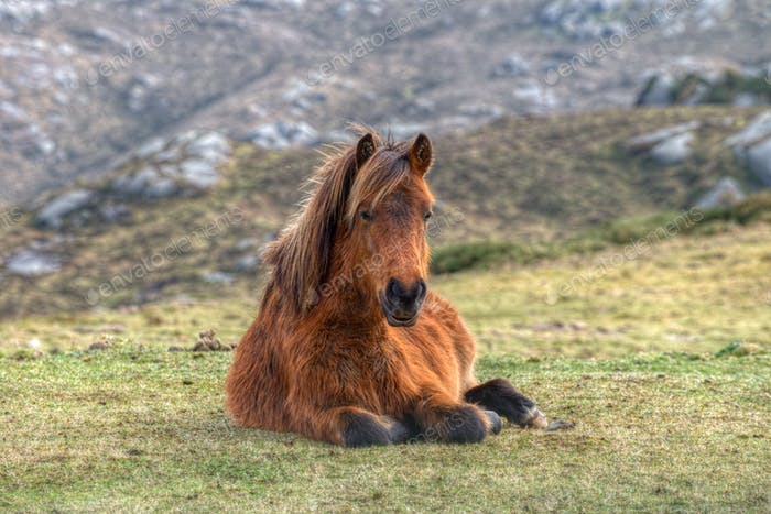 One horse lying in the grass