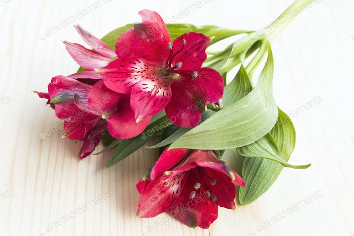 Red Alstroemeria Flower