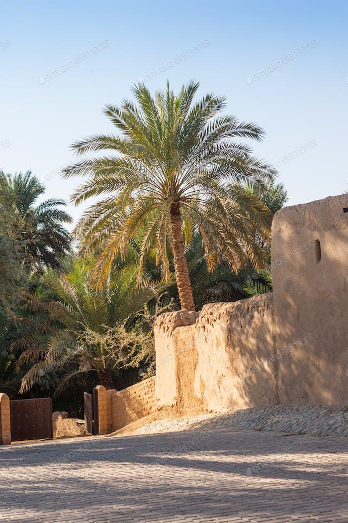 Jimi Oasis in Al Ain in the UAE