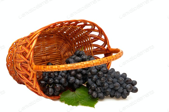 Bunches of grapes  in basket.